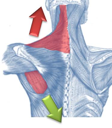 upper trap shoulder impingement