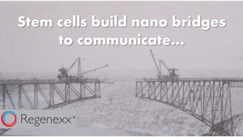 stem cells and nano bridges