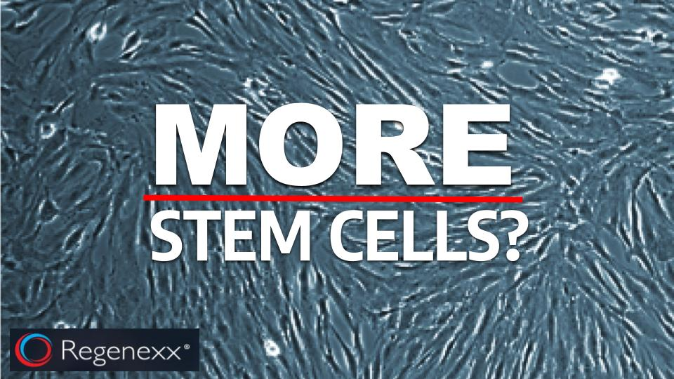 more bone marrow stem cells