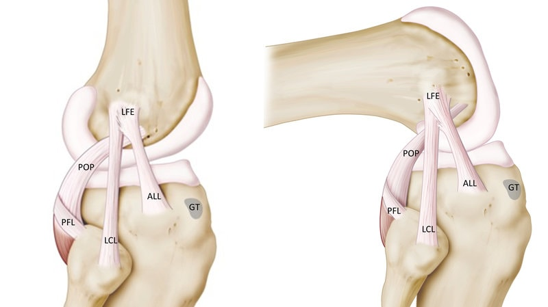 lcl all ligament side of knee